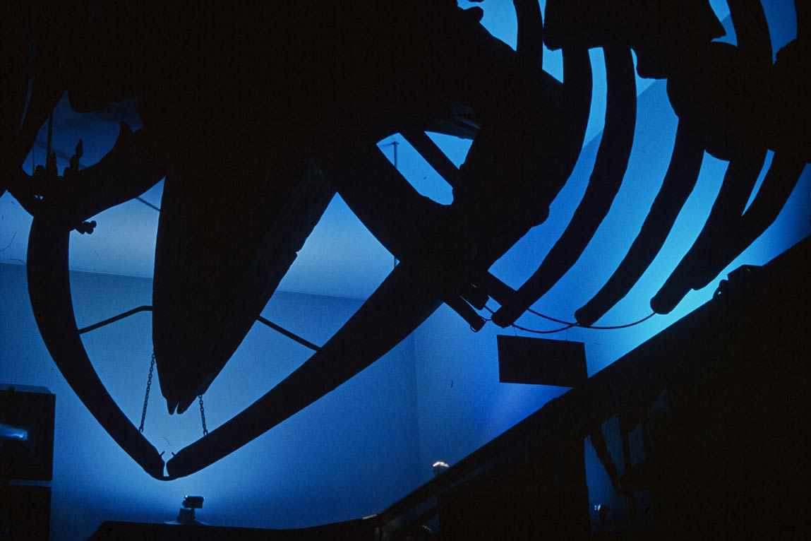 Muséum d'histoire naturelle, Bergen, Norvège - Conception lumière et photo Erik Selmer 1