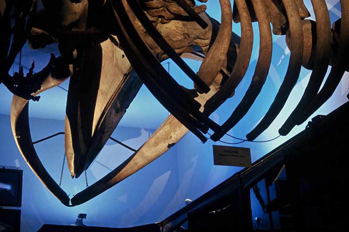 Muséum d'histoire naturelle, Bergen, Norvège - Conception lumière et photo Erik Selmer 2